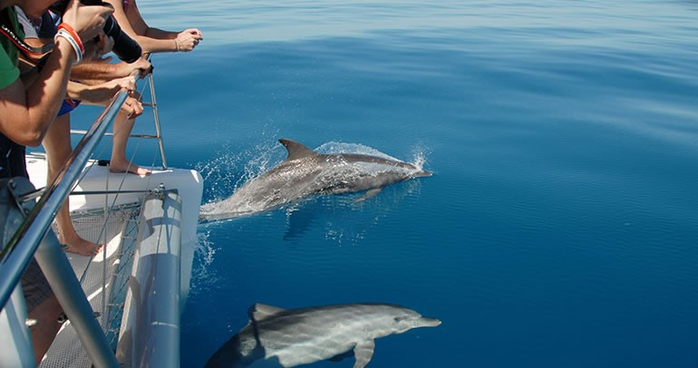 blue-dolphin-tours6
