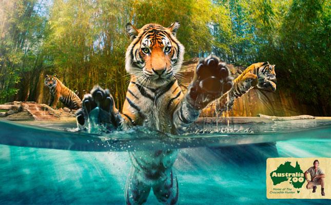 australia-zoo2