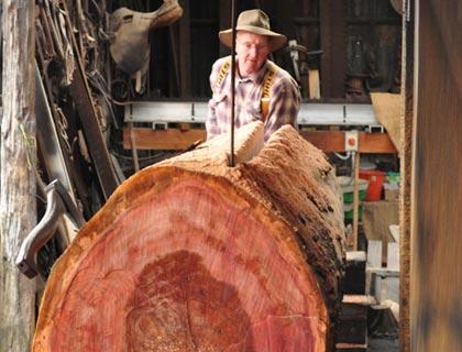 Morrisons-Huon-Pine-Sawmill-4