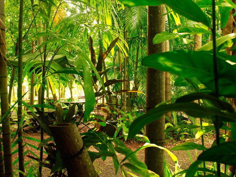rum_jungle_bungalows1