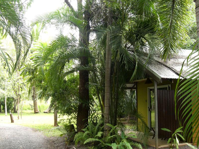 rum_jungle_bungalows3