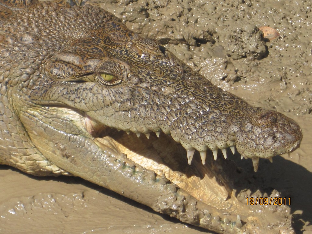 croccrab5